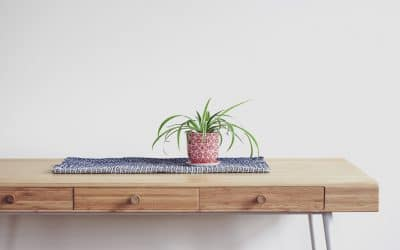 How long can a spider plant live for?