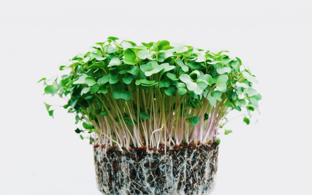 5 vegetables which are perfect for growing indoors