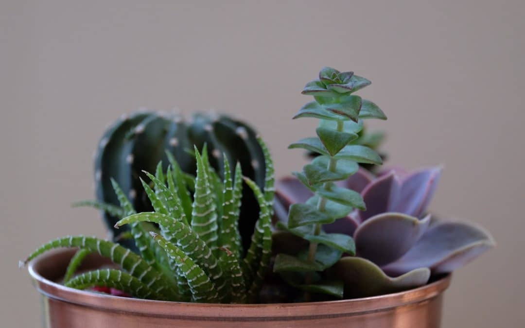 Can you plant succulents and cacti together in the same pot? (We show you how)