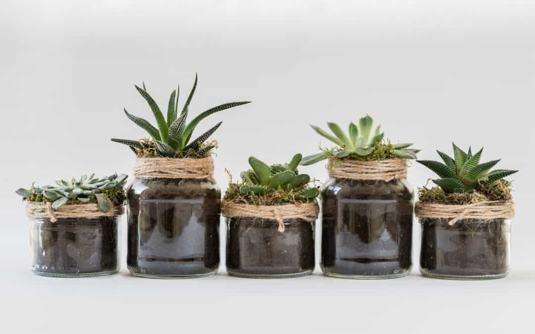 5 things most people get wrong with succulents
